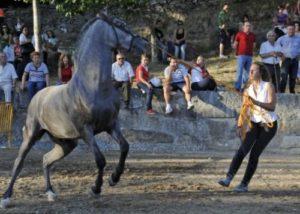 cabalo3