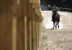 cabalo5